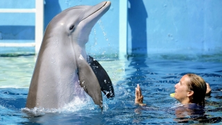 Dolphin Tale 2 (2014) Full Movie - HD 1080p BluRay