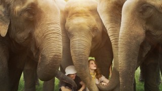 Naledi A Baby Elephant's Tale (2016) Full Movie - HD 1080p BluRay